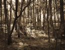 trees-biodiversity